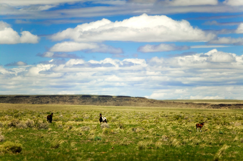 Wild horses near Lake Abert, Oregon