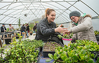 NWA Democrat-Gazette/BEN GOFF @NWABENGOFF<br /> Sami Decker (left) of Lowell learns from Lee Witty, Botanical Garden of the Ozarks horticulturalist, while making her potted arrangement Saturday, Jan. 12, 2019, during a 'Succulent Make and Take' class at Botanical Garden of the Ozarks in Fayetteville. Participants learned how to care for the water-conserving plants native to arid climates and made their own arrangement to take home.