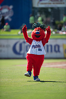 Stockton Ports mascot, Splash, entertains the crowd before a California League game against the San Jose Giants on April 9, 2019 in Stockton, California. San Jose defeated Stockton 4-3. (Zachary Lucy/Four Seam Images)