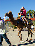 Riding camel at the Living Desert
