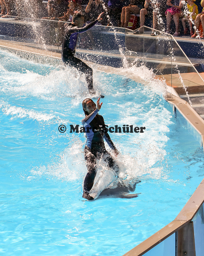 Tiertrainer im Wasser bei der Delfinshow im Stadion Sam im Vergnügungspark Zoomarine - 25.09.2019: Zoomarine Park, Guia, Albufeira an der Algarve