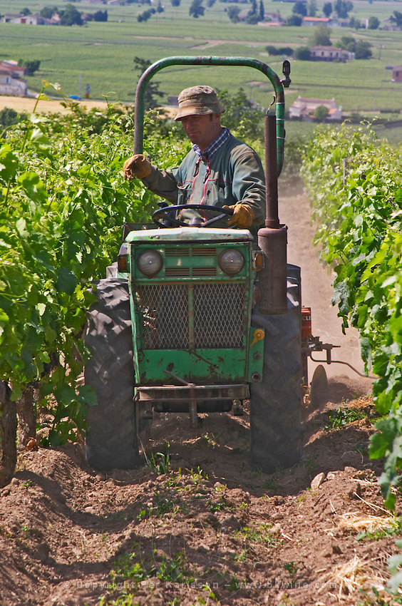 In the vineyard a worker on a tractor working the soil Chateau Belair (Bel Air) 1er premier Grand Cru Classe Saint Emilion Bordeaux Gironde Aquitaine France