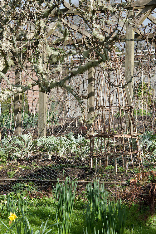 Walled kitchen garden, Trevarno, Cornwall, mid February.
