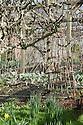 Walled kitchen garden, Trevarno, Cornwall, mid February.