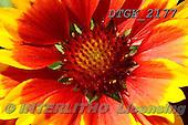 Gisela, FLOWERS, BLUMEN, FLORES, photos+++++,DTGK2177,#f#