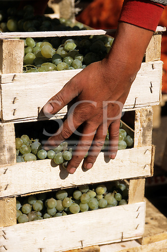 Bucharest, Romania. Wholesale fruit and vegetable market; wooden boxes of grapes, man's hand.