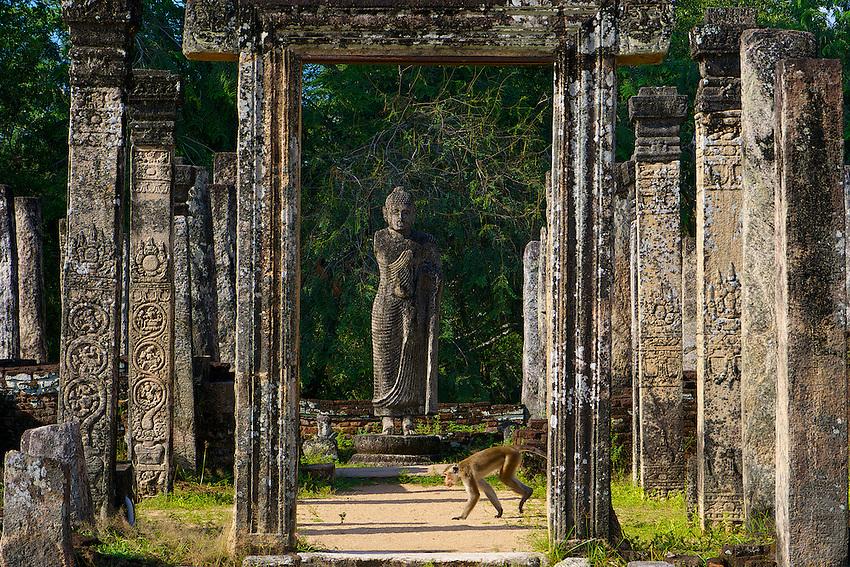 Monkeys at Polonnaruwa-Mediaeval Capital City, Sri Lanka