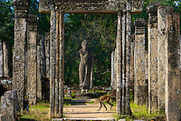 Monkeys at Polonnaruwa-Mediaeval Capital City, Sri Lanka