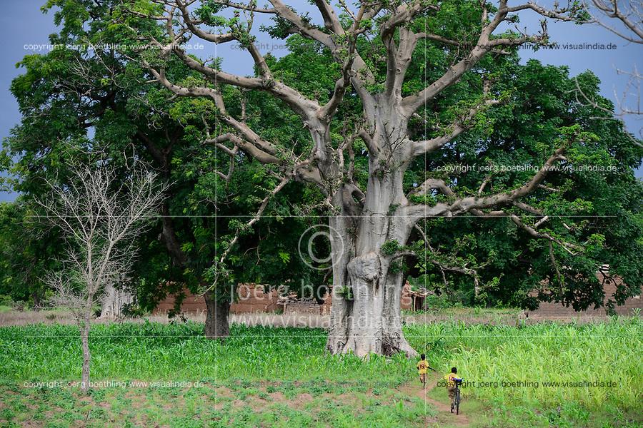 BURKINA FASO, Province Poni, Gaoua, , Baobab tree and maize field in raining season / Baobab Baum und Maisfeld in der Regenzeit