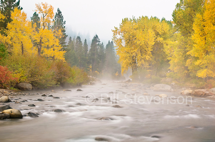 A photo of early morning mist on the Truckee River in the fall.