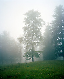 FRANCE, Val-de-Travers, Creux du Van Canyon, trees and fog in the countryside, Jura Wine Region