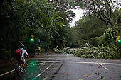 New York, New York<br /> September 16, 2010<br /> <br /> Park Slope after a severe storm and possible tornado. Inside Prospect Park.