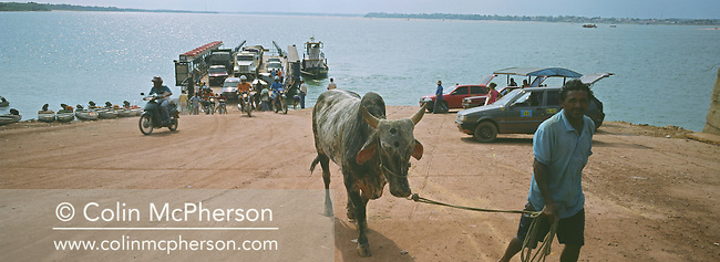 A passenger with a cow disembarks from a ferry crossing the Tapajos river from the town of Itaituba. The town was connected to the interior of the Amazonian basin by a series of unpaved road, such as the Transamazon and BR163 highways. The area surrounding the highways was the front line in the battle between local communities and environmentalists who tried to prevent to spread of rainforest destruction by illegal loggers and companies which bought and seized land for use in cattle ranching and growing soy beans for export from Brazil via the port at Santarem.