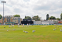 Seagulls invade the pitch during Essex CCC vs Warwickshire CCC, Specsavers County Championship Division 1 Cricket at The Cloudfm County Ground on 16th July 2019