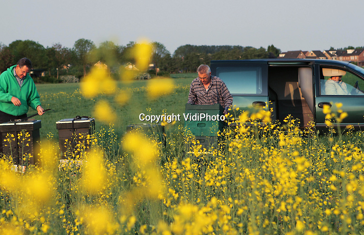 Foto: VidiPhoto..PANNERDEN - De imkers Theo Joosten (r) uit Gendt en Adriaan van Egmond uit Dodewaarden, plaatsen maandag hun bijenkasten bij de 10 ha. koolzaad van melkveehouder Wezendonk uit het Gelderse Pannerden. Koolzaad staat op dit moment volop in bloei. Voor Wezendonk betekent de bestuiving door de bijen meer opbrengst en de imkers 'oogsten' na de bloei van het koolzaad honing. Voor een goede bestuiving zijn volgens de imkers twee sterke bijenvolken per ha. nodig. Het koolzaad wordt gebruikt voor de voedingsindustrie en biobrandstof..