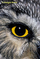 OW11-006z  Saw-whet owl - close up of eye - Aegolius acadicus