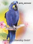 Alfredo, REALISTIC ANIMALS, REALISTISCHE TIERE, ANIMALES REALISTICOS, paintings+++++,BRTOXX10486,#a#, EVERYDAY ,parrot,parrots
