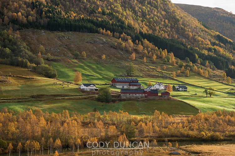 Hillside farm surrounded by colors of autumn, near Nysete, Sogn of Fjordane, Norway