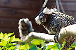 Owl and Monkey Haven, Isle of Wight