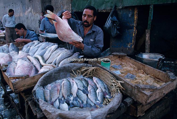 Cairo's fish market, Egypt