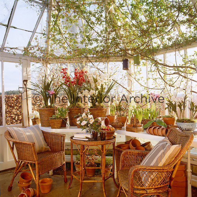 Cane and wicker furniture and cache-pots for the plants and orchids all by OKA in a wintry looking greenhouse