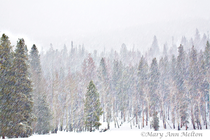 Photography Based Fine Art view of Rocky Mountain National Park during a heavy snow..