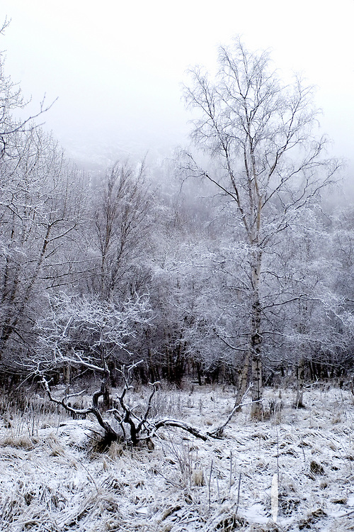 Frost covers trees in the Alaska winter in Chugach State Park, outside Anchorage.