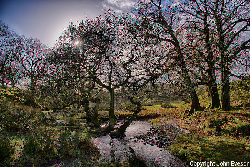 Horse Chestnut trees and Dinkling Green Brook, Dinkling Green, Whitewell, Clitheroe, Lancashire.