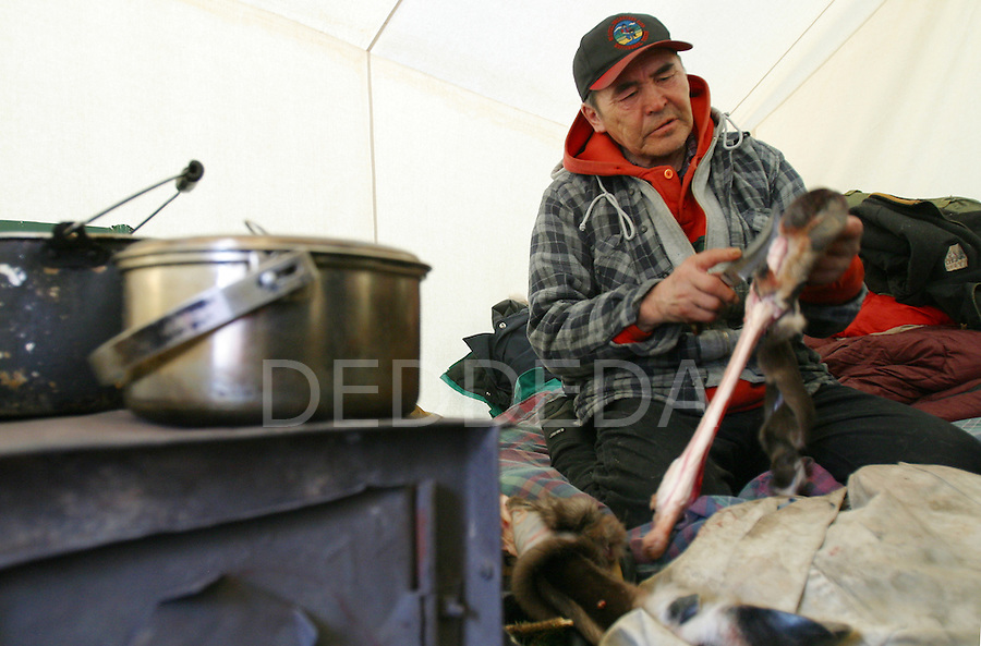 Vuntut Gwitchin First Nation elder, Irwin Linklater, cuts open the bone of a caribou leg near Old Crow, Yukon Territory, Canada. The bone marrow is eaten raw from the caribou legs.