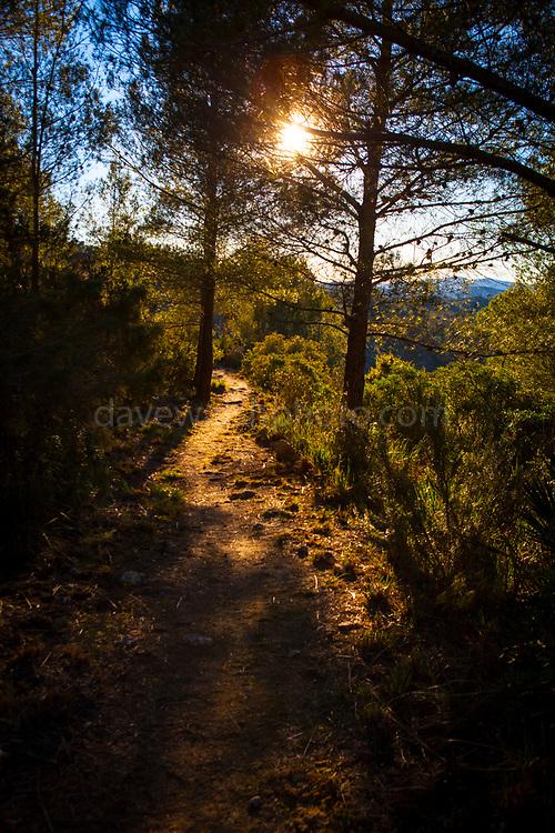 Olivella, Parc Natural de Garraf, Catalonia, Spain