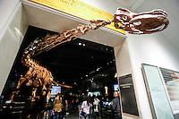 The Titanosaur, the largest dinosaur ever displayed at the American Museum of Natural History, is revealed on it's first day open to the public   in New York. 15.01.2016. /VIEWpress.