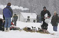 Doug Swingley feeds his dogs at the Nikolai checkpoint shortly after arriving in first place on Tuesday