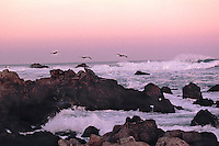 Foaming surf catches the light of sunrise with rocks flying birds, and the motion of the  tide, California, USA