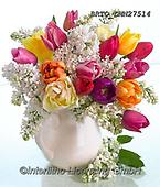 Alfredo, FLOWERS, BLUMEN, FLORES, photos+++++,BRTOLMN27514,#f#, EVERYDAY ,rose,roses