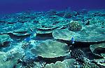 Maldives, atolls, islands, tropics, sea life, fish life, holiday, lifestyle, Indian Ocean, blue sky, lagoon, coral reefs