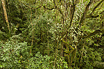 The understory of a tropical lowland semi-deciduous rainforest in Panama, viewed from the observation tower at the Panama Rainforest Discovery Center near Gamboa.