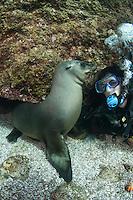 QT7278-D. California Sea Lion (Zalophus californianus) interacting with scuba diver (model released). Baja, Mexico, Sea of Cortez, Pacific Ocean.<br /> Photo Copyright &copy; Brandon Cole. All rights reserved worldwide.  www.brandoncole.com