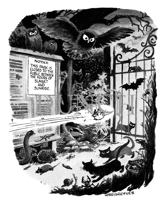(A frightened bird flies quickly through a scary park at night time, surrounded by rats, spiders, cats, bats, toads, snakes and owls)