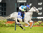 February 8, 2020: #3, Jehozacat just holds off a strong closing Altea (FR) under Jockey Daniel Centeno for Trainer Arnaud Delacour in the $150,000 Grade III Lambholm South Endeavour Stakes on February 8, 2020 in Tampa, FL. (Photo by Carson Dennis/Eclipse Sportswire/CSM)