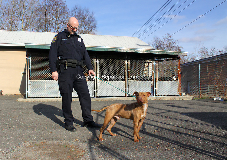 NAUGATUCK CT.-14 DECEMBER 2011 121411DA04-Naugatuck Police Officer Carl Schaaf walks a young pit-bull bix that is up for adoption at the Naugatuck Municipal Dog Pound on Wednesday. Naugatuck and five other towns in the Greater Waterbury area working together with the Council of Governments to get a grant to study a regional animal control facility. <br /> Darlene Douty Republican American.