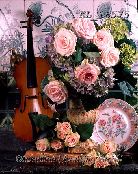 Interlitho-Alberto, FLOWERS, BLUMEN, FLORES, photos+++++,roses, violin,KL16575,#f#, EVERYDAY ,rose,roses