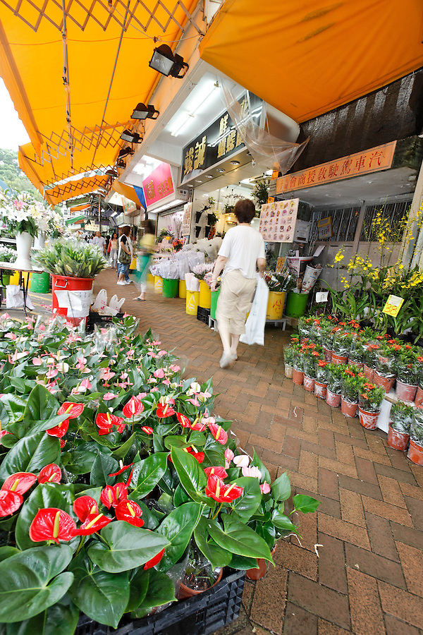 Flowers for sale on Flower Market Road, Mong Kok, Kowloon, Hong Kong SAR, People's Republic of China, Asia