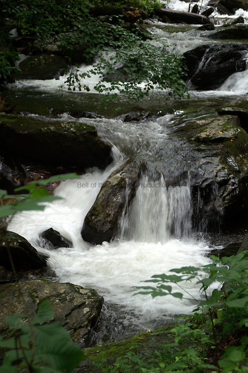 Smith Creek vigorously tumbles downhill from Anna Ruby Falls.