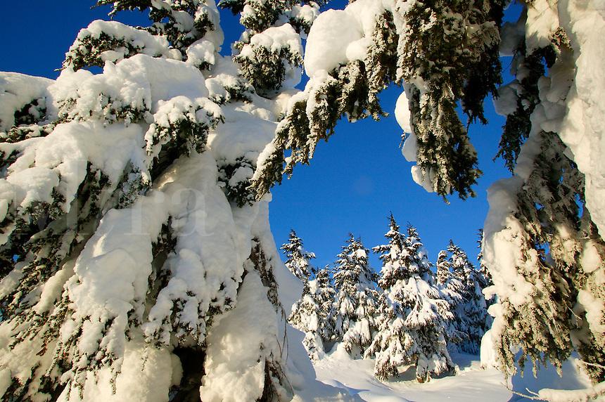 Chugach National Forest in the winter, Turnagain Pass, Kenai Peninsula, Alaska.