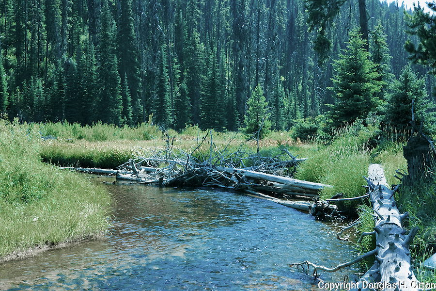 The remote Red River, a truly wild and scenic river in Idaho is an upper tributary of the Clearwater, a famous and remote trout stream.  Both are famous gold mining areas near Elk City, Idaho.  Pine Beetle damage is evident in this view downstream from Red River Campground.
