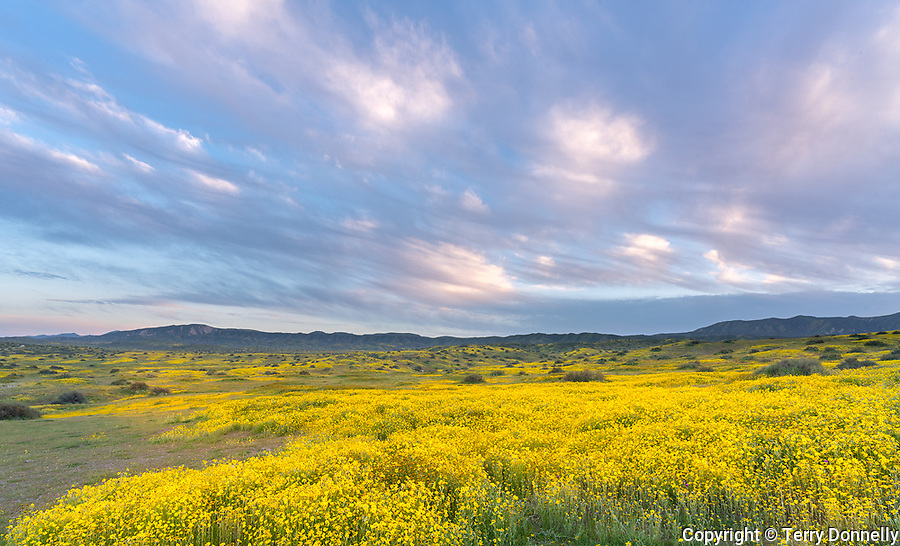 Carrizo Plain National Monument, California:<br /> Spring blooms of owls clover, monolopia and fiddleneck with clouds rolling over the coastal range