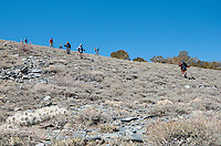 Hikers from the Appalachian Mountain Club on Telescope Peak Trail, Death Valley National Park, California. In the foreground is a grizzly bear cactus, Opuntia erinacea erinacea.