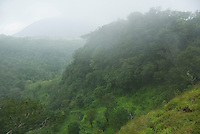 Fog and forest on upper slopes of Mount Manucoco, Atauro Island, Timor-Leste (East Timor)