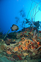 Underwater scenics at Cane Bay wall<br />
