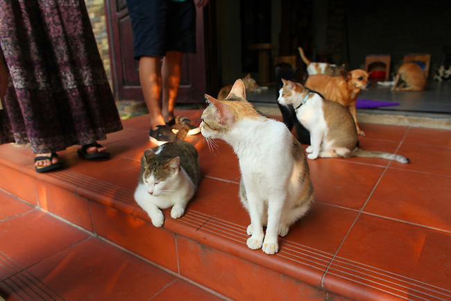 Jack's Cat Cafe. Hoi An, Vietnam. April 15, 2016.